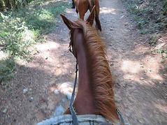 Paardrijden.jpg