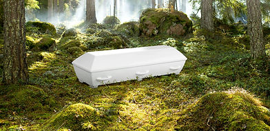 1 Saga Struktur vit i skog_web.jpg