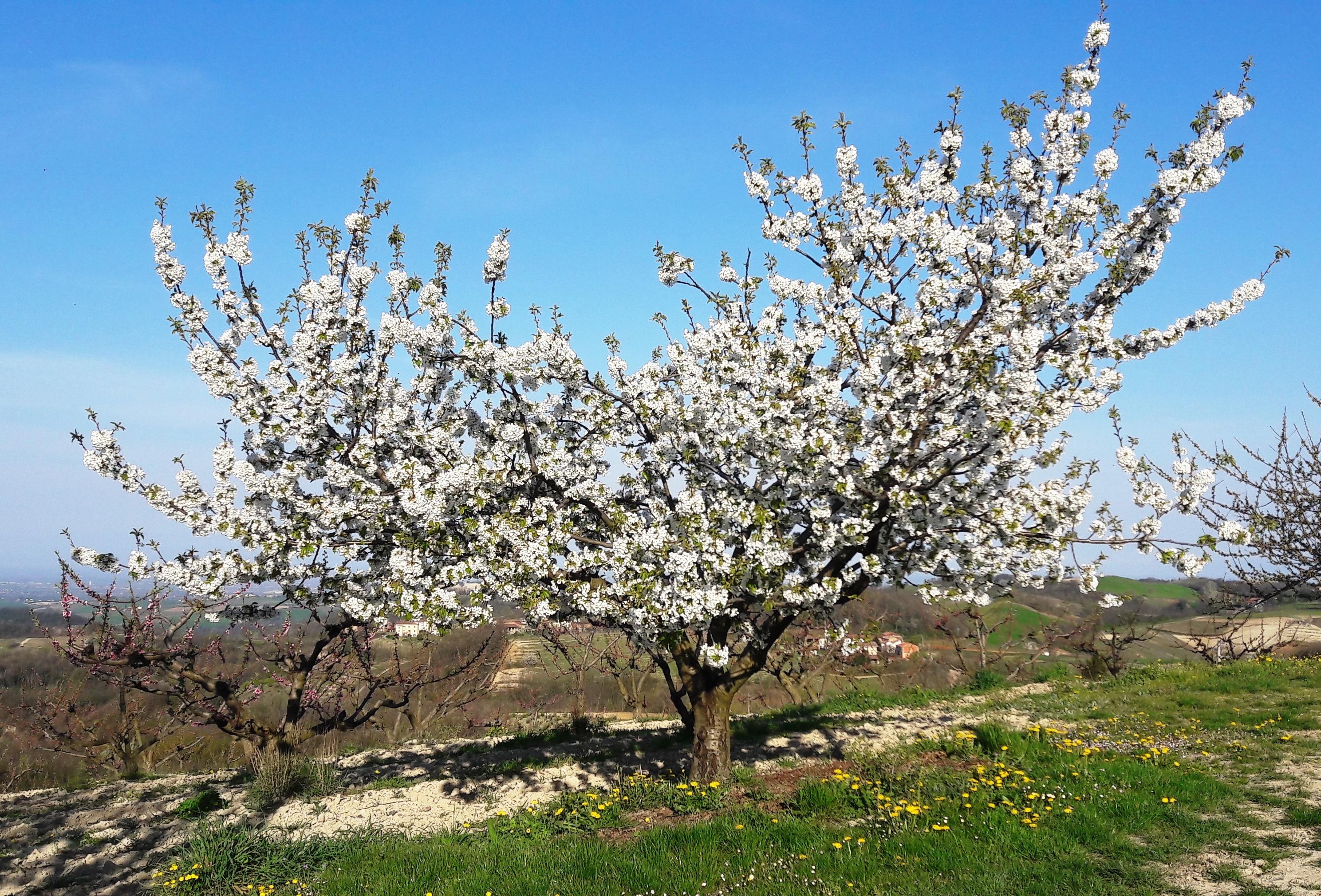 primavera a montemarzino