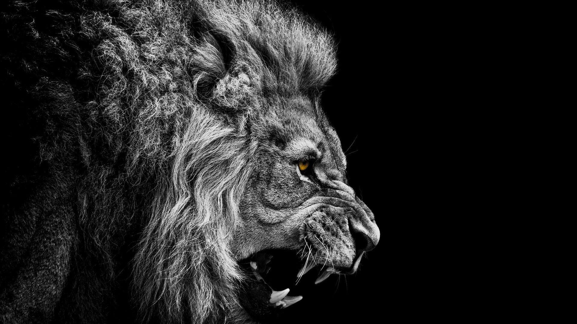 Lion-Wallpaper-Iphone-HD.jpg