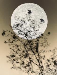 Moon 2018, ©Ilona Langbroek
