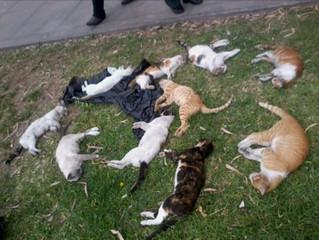 Projeto de lei defende controle reprodutivo de cães e gatos no Ceará