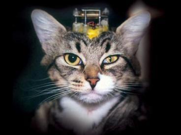 gato-experimentacao-animal-cranio