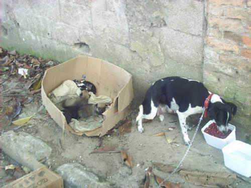 animais abandonados 3
