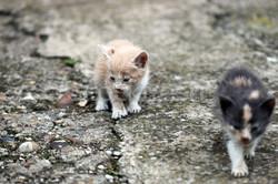 4713440_dois-abandonado-gatinhos-triste-gatos-sem-casa