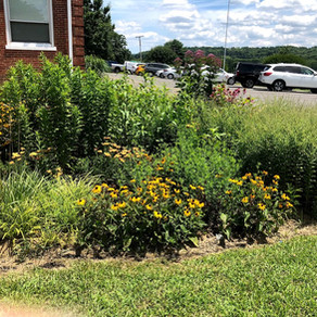 -POSTPONED-Rain Garden Design and Rebate Program!