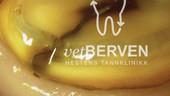 vetberven_logo_0013.jpg