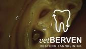 vetberven_logo_0016.jpg