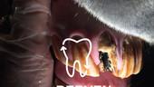 vetberven_logo_0018.jpg