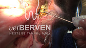 vetberven_logo_004.jpg