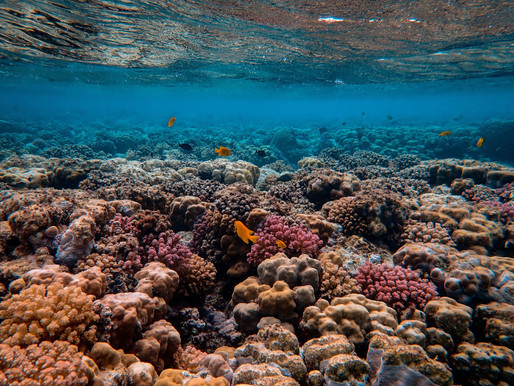 Sustainability of coral reefs