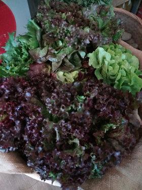 salade bio poids