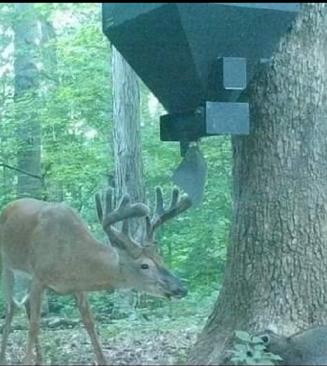 Big Buck 1.png