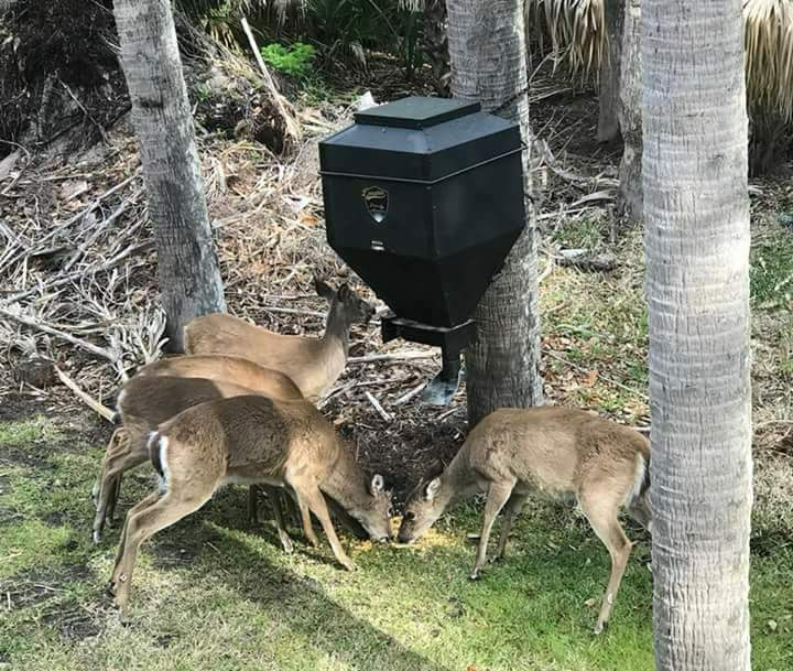 Deer feeding off Douglas lower unit