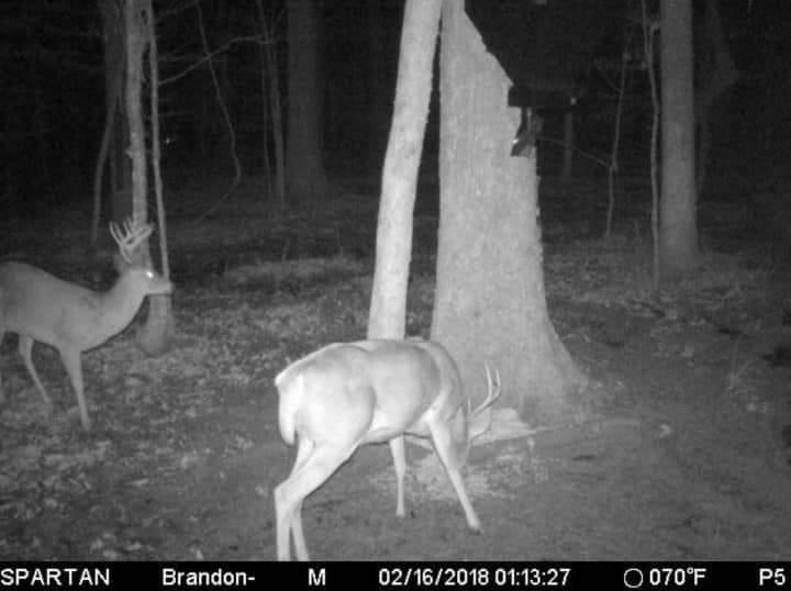 Deer feeding from Douglas lower unit