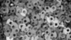 IMG_6250_-_Foto_tratada_para_SINTERIZADO