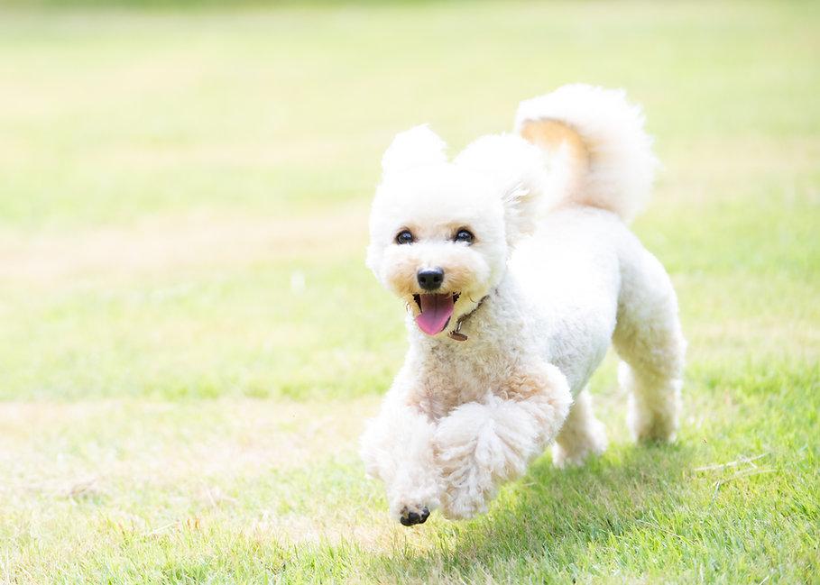 飛行犬 ドッグトレーニング