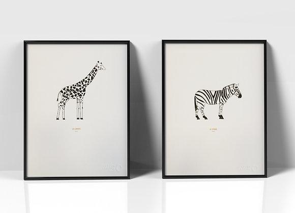 Le Zèbre et la Girafe