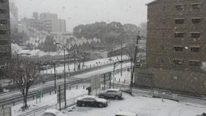 本日、雪のため臨時休校です