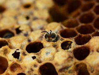 Taller Cata de miel y Casa de las Abejas