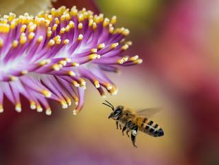 """Agradecimiento Asistencia a """"2ª Feria de las abejas y otros polinizadores 2020"""""""