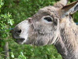 """""""Enfoques terapéuticos con burros y jardines"""""""