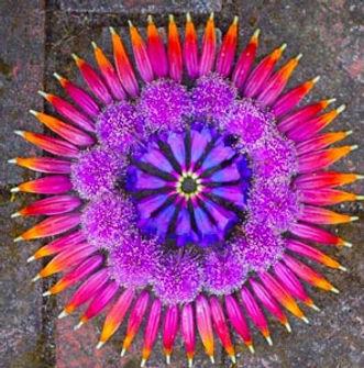 danmala-flower-mandala-kathy-klein-41_ed
