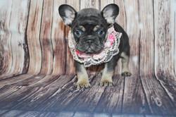 Rosie and Ringos pups