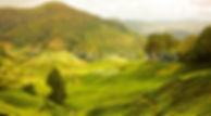 CAMERON-HIGHLANDS.jpg