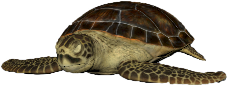 Turtle Rendered copy.png