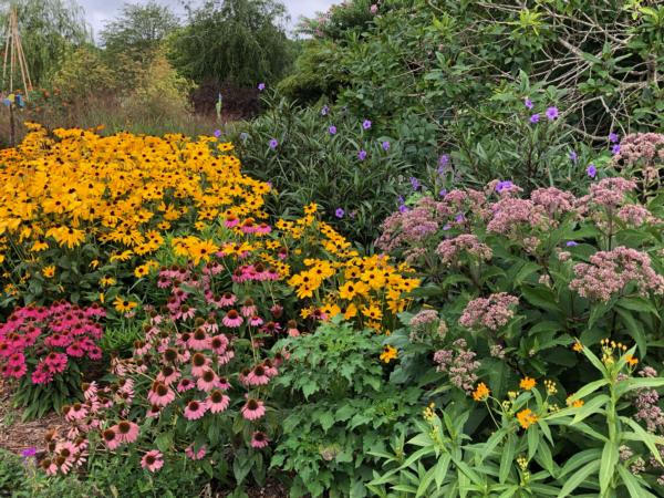 Native Plants at Grin & Grow