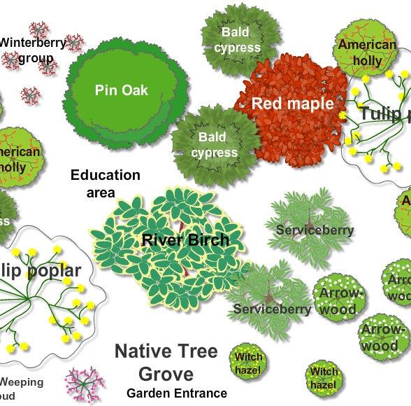 9. Native Tree Grove 2020 jpeg copy.jpeg