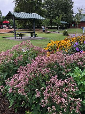 butterfly garden.jpeg