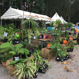 Fall Plant Sale 2018 at NN Park