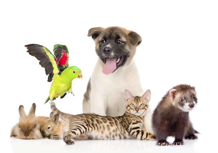 large group of pets. Isolated on white b
