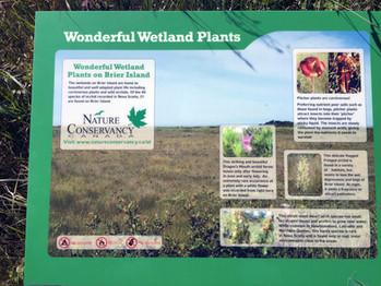 Wetland Plants Signage2.jpg