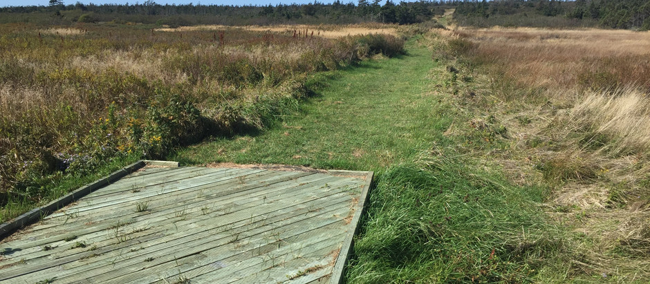 Trail to Jimmy's Pond