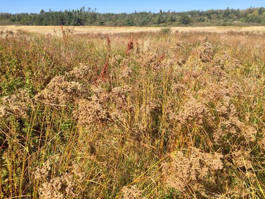 Several varieties of grasses