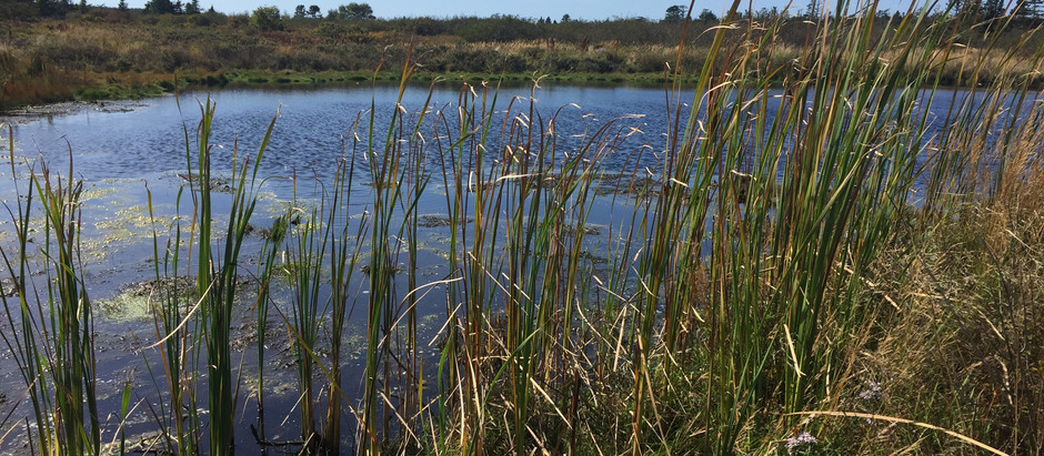 Big Meadow Bog Trail Leads to Amazing Experience