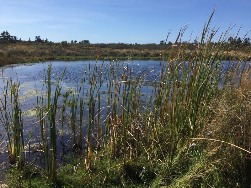 Jimmy's Pond