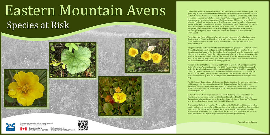 Brier Islands Avens - English sign