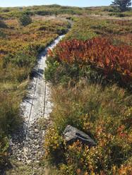 Coastal Trail near Western Light.jpg