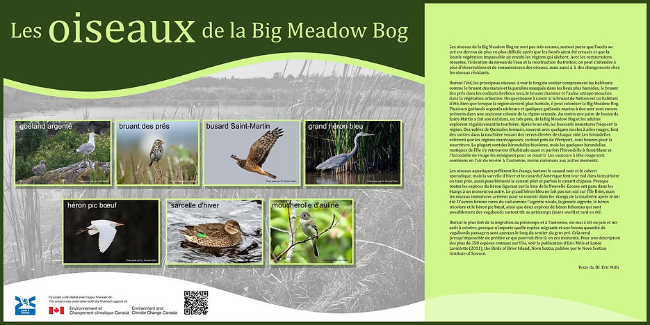 Les oiseaux de la Big Meadow Bog