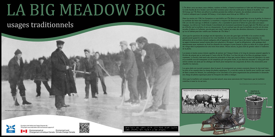 Brier Island Traditional Uses of the Bog