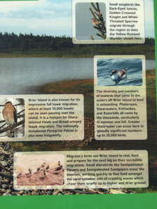 Migratory Birds Signage4.jpg