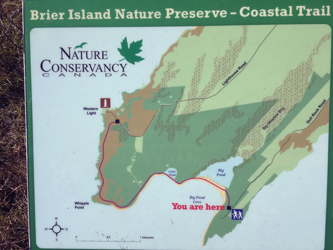 Coastal trail can be accessed at Pond Co