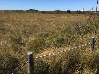 Field of Pitcher Plants.jpg