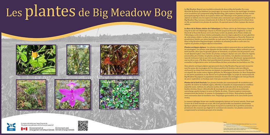 Les plantes de Big Meadow Bog