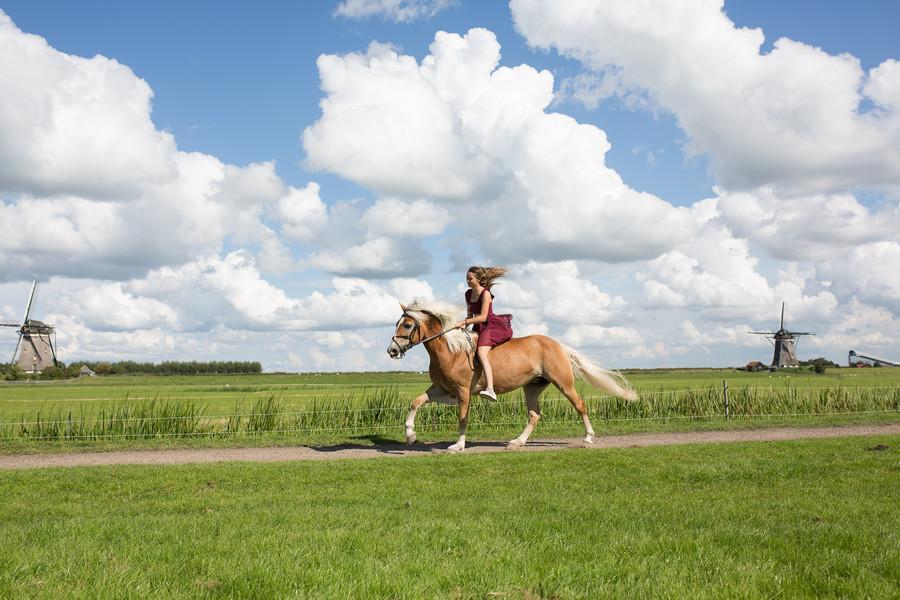 Portretshoot paard galop