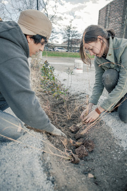 Cannoneer Court Planting
